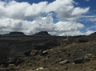 Pérou De Cuzco à L'Equateur - 28 (1)