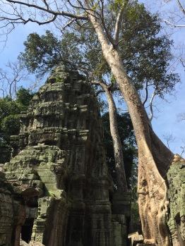 Cambodge - 771