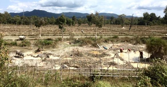 Laos - 102